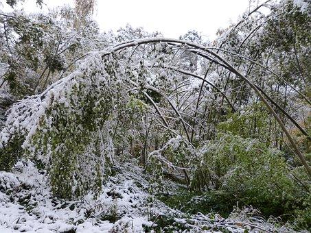 Winter, Forest, Snow, Destruction, Winter Damage