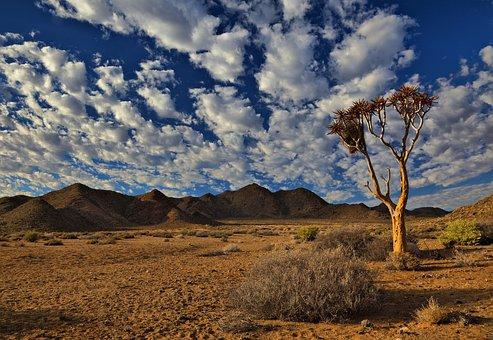 Richtersveld, South Africa, Desert, Dry, Hot, Tree