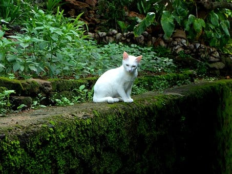 Cats, White, Kitten, Animals, Mammals, Baby, Young