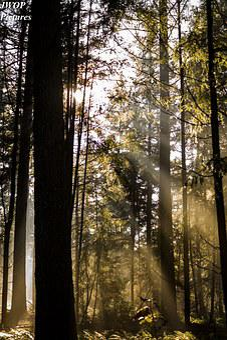 Forest, Light, Autumn, Mystical, Mood, Light Beam, Sun