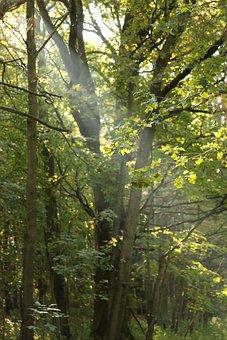 Sunbeam, Forest, Mood, Autumn, Nature, Trees, Sunlight