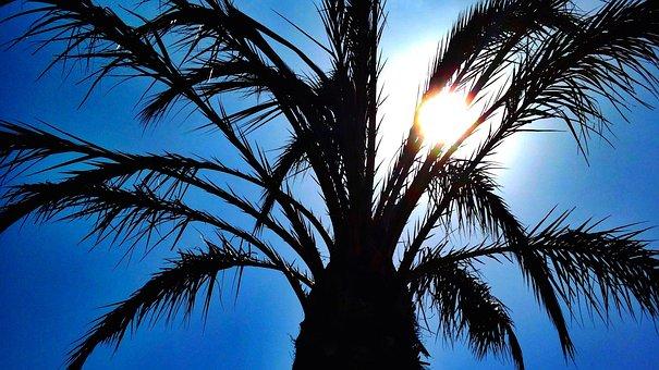 Palm Tree, Tree, Tropical, Sun, Heaven, Silhouette
