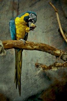Parrot, Bird, Colorful, Animal, Nature, Tropical, Pet