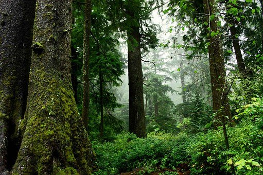 Forest, Wood, Nature, Trees, Foam, Foliage, Undergrowth
