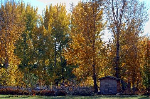 Landscape, Autumn, Chicken Coop, Tree, Autumn Landscape