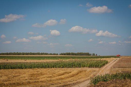 Field, Haymaking, Sunny, Landscape, Summer, Combine