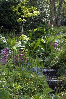 Hillside Garden, Planting, Shrubs, Trees, Tranquil