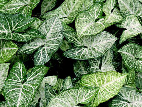 Green, Leaves, Nature, Pattern, Plant, Shapes, Top View