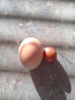 Eggs, Different, Sizes, Hen, Food, Chicken, Protein
