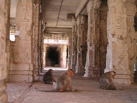 India, Ape, Temple, Ape Horde, Monkey Family