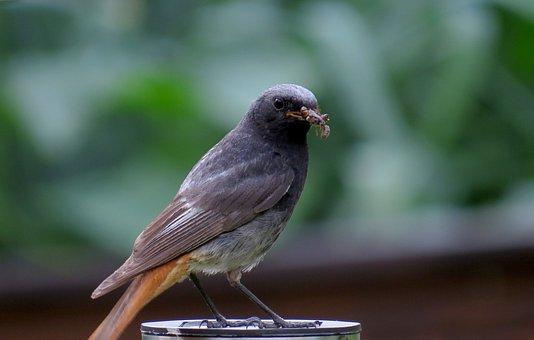 Sparrow, Bird, Animal, Plumage, Close, Young, Foraging