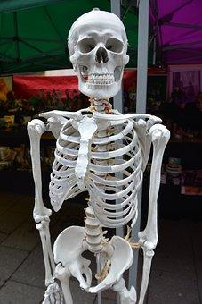 Skeleton, Bones, Human, Body, Anatomy, Medical, Health