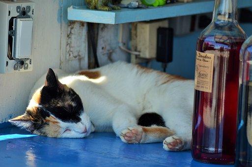 Cat, Nap Cat, Feline, Domestic Animal, Pet, Kitten