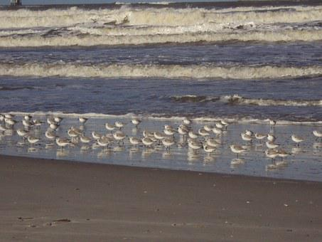 Coastline, Ameland, Beach, Beautiful Beach