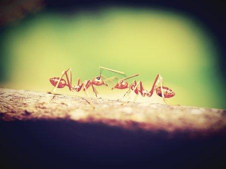 Red, Ant, Closeup, Tree, Bark, Green, View, Horizontal