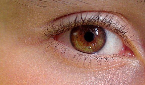 Eye, Human Eye, The Anatomy Of A, Construction Of Man