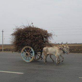 Bullock Cart, Ox Waggon, Waggon, Shiggaon, India, Cart