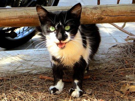 Cat, Kitten, Young Cat, Animals, Cat's Eyes, Cat Look