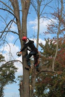 Tree, Emerald Ash Borer, Limbing, Chainsaw, Disease