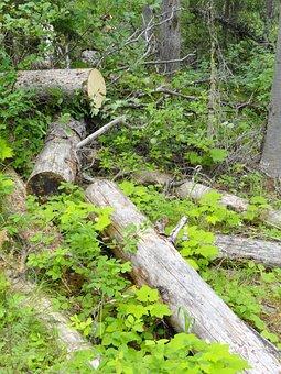 Emerald Lake, Alberta, Green Leaves, Logs
