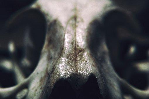 Skull, Animal, Skeleton, Macro, Natural, Death, Dead