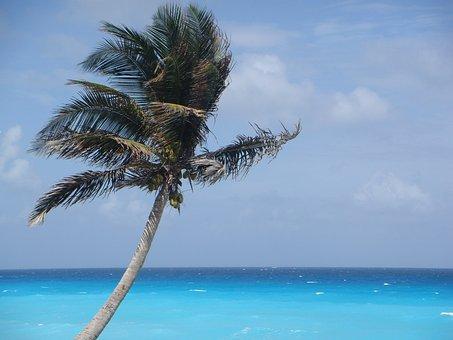 Palm Tree, Mexico, Vacation, Beach, Tropical, Palm