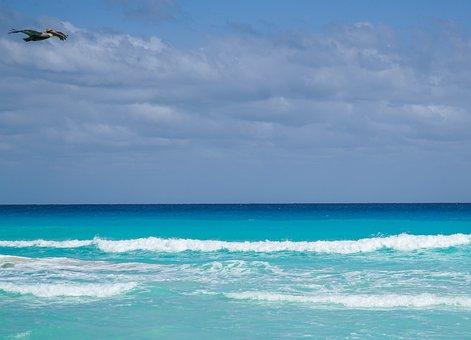 Ocean, Cancun, Mexico, Bird, Waves, Sky, Clouds, Beach