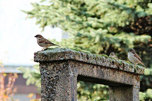 Birds, Sparrows, Archway, Moss, Roof, Landscape, Nature