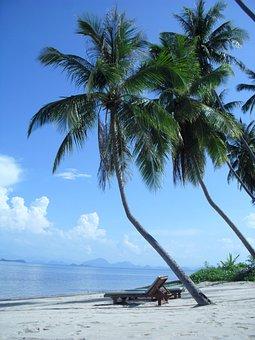 Beach, Sea, Holidays, Palm, Sand, Sun, Lounge Chairs