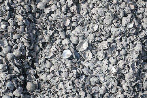 Shells, Ameland, Sea, Sandy Beach, Island, Land Wash