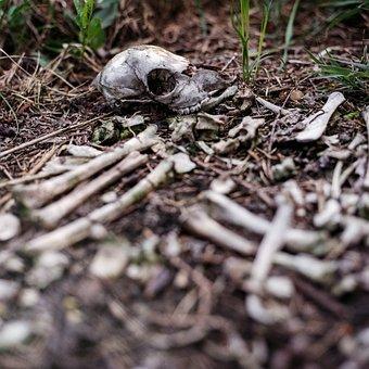 Skull, Pile Of Bones, Bones, Scary, Dead, Death, Fear