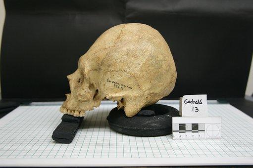 Skull, Skeletons, Bones, Fear, Terror, Death