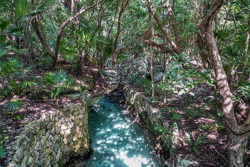 Xcaret, Cancun, Mexico, Forest, River, Tropical, Nature