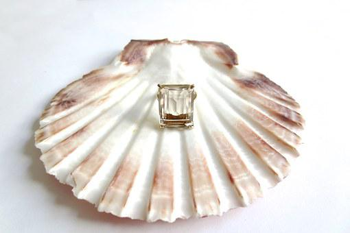 Vintage, Scallop, Shell, Sea, Beach, Holiday, Vacation