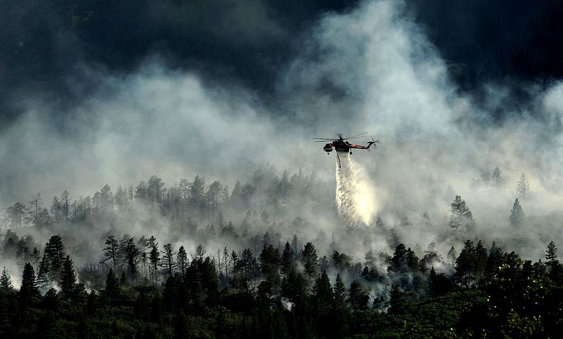 Colorado Springs, Colorado, Forest, Trees, Woods, Fire
