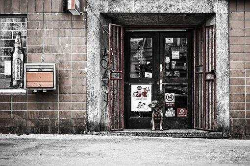 Animal, Dirty, Dog, Door, Grime, Old Building, Pattern
