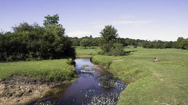 Countryside, Stream, Brook, Nature, Landscape, Water