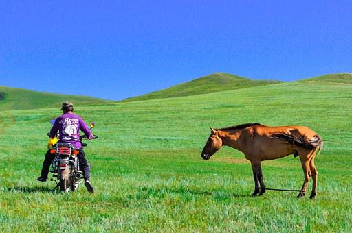 Countryside, Steppes, Nature, Bike, Horse, Dilemma