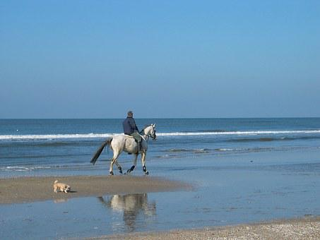 Horse, Mold, Rider, Dog, Beach, Sea, Sand Water