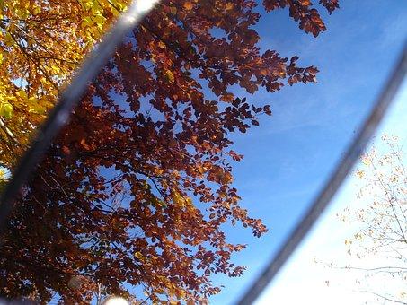 Leaves, Sunglasses, Filter, Filtering, Darken, Trick