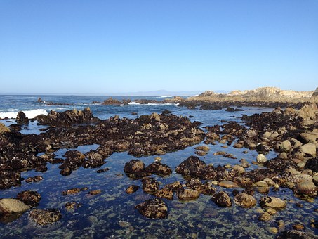Tide Pool, Pacific Grove, Monterey Penninsula