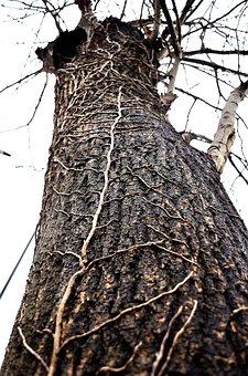 Tree, Ivy, Strain, Season, Nature, Chicken, Background