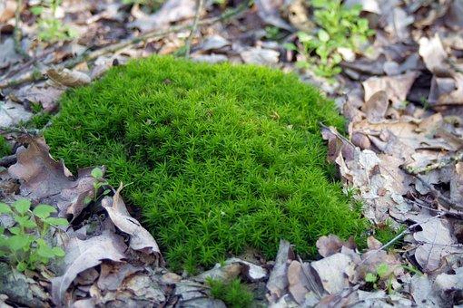 Moss, Lichen, Undergrowth, Forest, Plants, Green
