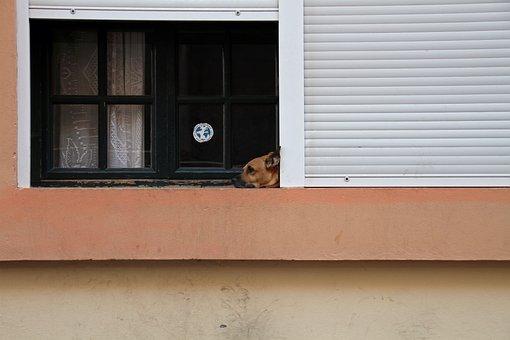 Dog, Dog At Window, Pet, Looking, Waiting