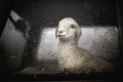 Lamp, Funny, Cute, Animal, Transportation, Window