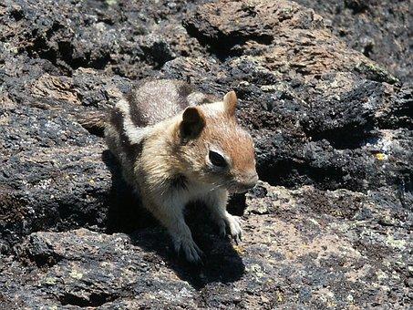 Chipmunk, Nature, Animal, Wildlife, Mammal, Furry, Cute