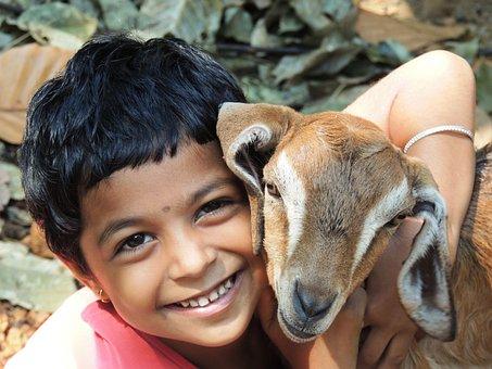 Lamb, Girl, G, Animal, Child, Sheep, Kid, Hug, Little