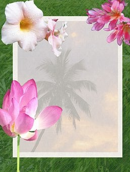 Flowers, Tropical, Tropics, Beach, Palm Trees, Scenic