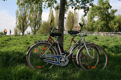 Mauerpark, Berlin, Meadow, Bike, Wheel, Nature, Grass