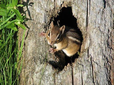 Chipmunk, Tree, Nature, Wildlife, Cute, Closeup